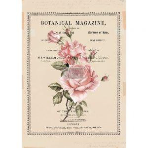 "Redesign Décor Transfers®- Beautiful Botanist 24""x 34"""